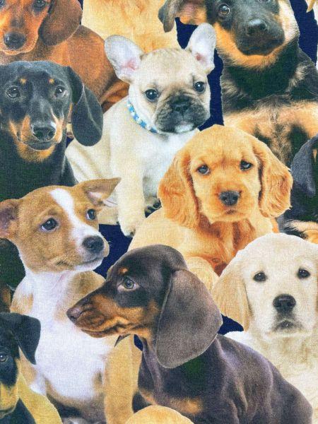 Baumwolle Ökotex Hunde2